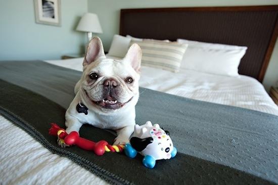 pes-v-hotely-stupava